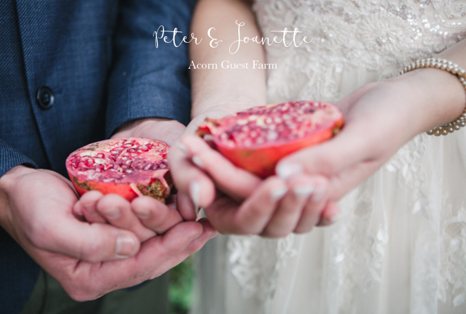 DUST AND DREAMS PHOTOGRAPHY _ REAL WEDDING _ ACORN GUEST FARM 2017